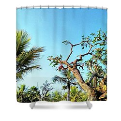 Tree And Blue Sky Shower Curtain