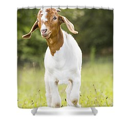 Dougie The Goat Shower Curtain