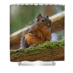 Douglas Squirrel Shower Curtain