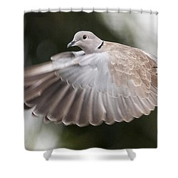 Dove Flight Shower Curtain