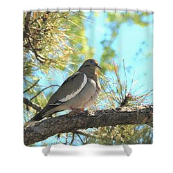 Dove In Pine Tree Shower Curtain