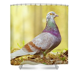 Dove  Standing Close Up Shower Curtain