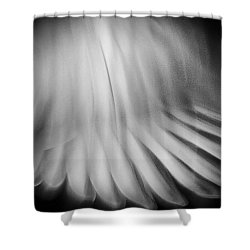 Dove Wings In Flight Shower Curtain