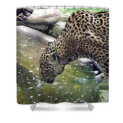 Down For A Drink Shower Curtain