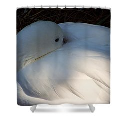 Down For A Nap Shower Curtain by Karen Wiles
