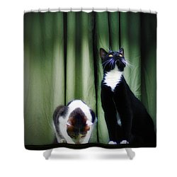Down Or Up Shower Curtain by Bill Cannon