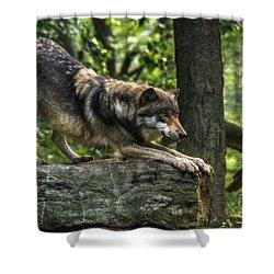 Downward Facing Wolf Shower Curtain