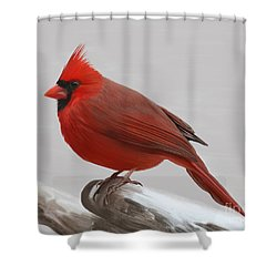 Downy Winter Male Shower Curtain
