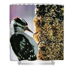 Downy Woodpecker Shower Curtain by Aliceann Carlton