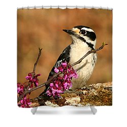 Downy Woodpecker In Spring Shower Curtain by Sheila Brown