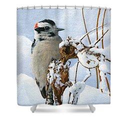 Downy Woodpecker  Shower Curtain by Ken Everett
