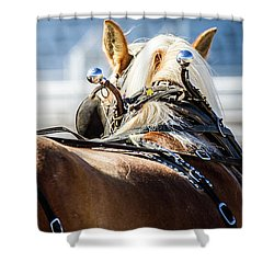 Draft Horses Ready Shower Curtain