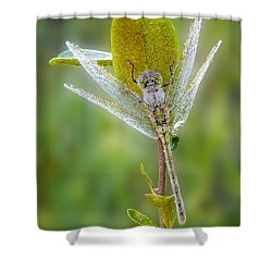 Dragon Fly In The Dew Shower Curtain