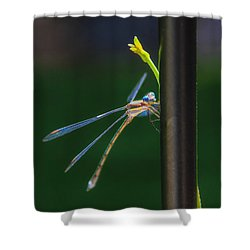 Dragon Fly Shower Curtain by Juli Ellen