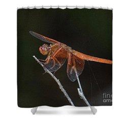 Dragonfly 11 Shower Curtain