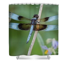 Dragonfly 12 Shower Curtain