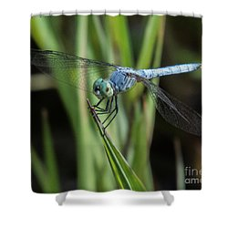Dragonfly 13 Shower Curtain