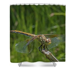 Dragonfly 7 Shower Curtain