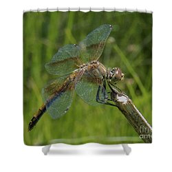 Dragonfly 8 Shower Curtain