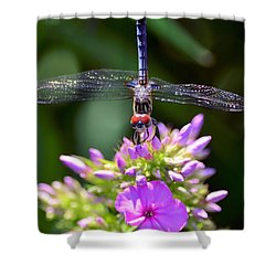 Dragonfly And Phlox Shower Curtain