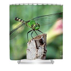 Dragonfly In The Flower Garden Shower Curtain by Carol Groenen