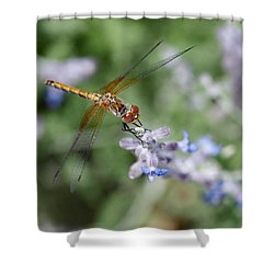 Dragonfly In The Lavender Garden Shower Curtain