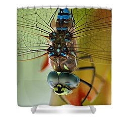 Dragonfly In Thought Shower Curtain