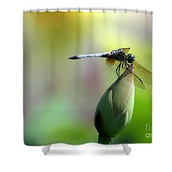 Dragonfly In Wonderland Shower Curtain by Sabrina L Ryan