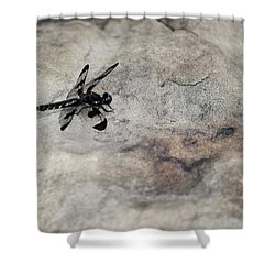 Dragonfly On Solid Ground Shower Curtain