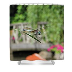Shower Curtain featuring the photograph Dragonfly by Michael Krek