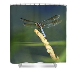 Dragonfly New York Shower Curtain by Bob Savage