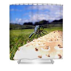 Dragonfly On A Mushroom Shower Curtain