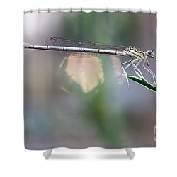 Shower Curtain featuring the photograph Dragonfly On Leaf by Michal Boubin