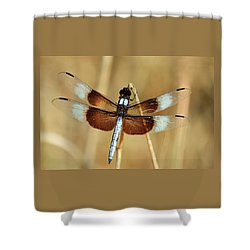 Shower Curtain featuring the photograph Dragonfly On Reed by Sheila Brown