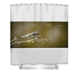 Shower Curtain featuring the photograph Dragonfly On The Spot by Stwayne Keubrick