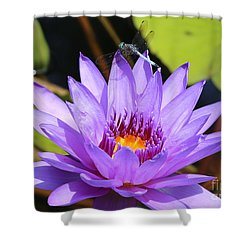 Dragonfly On Water Lily Shower Curtain by Carol Groenen