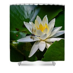 Dragonfly On Waterlily  Shower Curtain