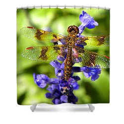 Shower Curtain featuring the photograph Dragonfly by Sandi OReilly