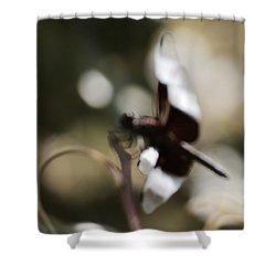 Dragonlights Shower Curtain by Tim Good
