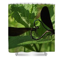 Dragons With Heart Shower Curtain by David and Lynn Keller