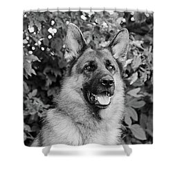 Shower Curtain featuring the photograph Drake Watching by Sandy Keeton