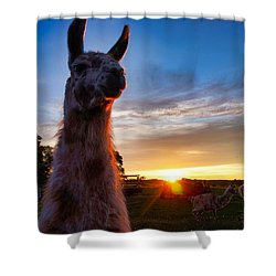 Drama Llamas Shower Curtain
