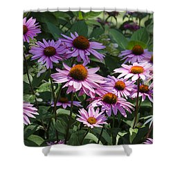 Dramatic Coneflowers Shower Curtain