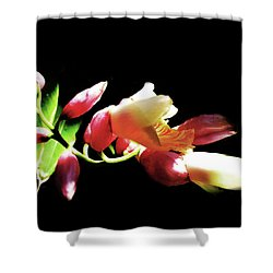 Dramatic Oriental Orchid Shower Curtain