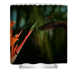 Drawn To Beauty Shower Curtain by Pamela Blizzard