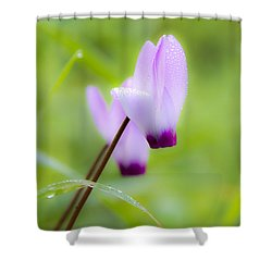 Shower Curtain featuring the photograph Dream On Purple Dew Drops by Arik Baltinester