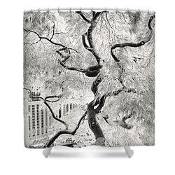 Dream Tree Shower Curtain by Dorit Fuhg