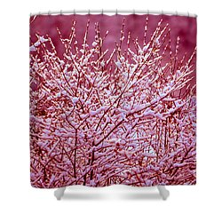 Shower Curtain featuring the photograph Dreaming In Red - Winter Wonderland by Susanne Van Hulst
