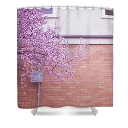 Dreaming Of Blossoming Shower Curtain