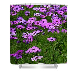 Dreaming Of Purple Daisies  Shower Curtain